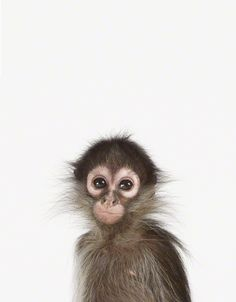 via animal print shop: monkey print for nursery