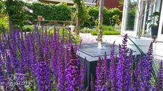 Arch, Outdoor Structures, Garden, Longbow, Garten, Lawn And Garden, Gardens, Wedding Arches, Gardening