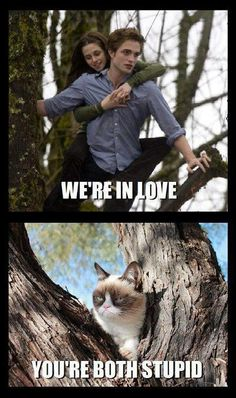 Grumpy cat weighs in on Twilight...Aaaand, that's a paws down from Grumpy cat.  Clearly she has sense ;-)