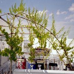 Mit der KLIMA-OASE gab  es einen Balkon-Beitrag zur BUNDESGARTENSCHAU 2005 PERSPEKTIVENWECHSEL, der ein guter Stress-Test für die textilen Pflanzbehälter war.