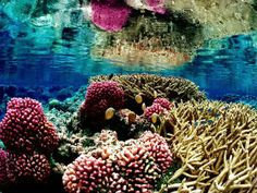 Coral Reef, Lakshadweep The coral reefs found under the waters of Lakshadweep Islands is worth exploring if you're a nature lover and adventurous.