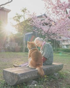 Japanese Dog Breeds, Japanese Dogs, Animals Of The World, Animals And Pets, Cute Animals, Best Friends For Life, Cute Friends, Shiba Inu, Lovely Creatures