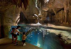 Madagascar!, Bronx Zoo, New York, USA, by The Wildlife Conservation Society