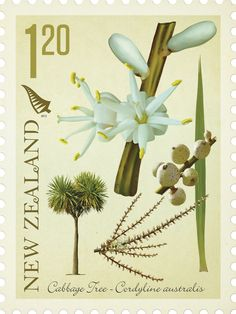 Native Trees Stamp Series by Stephen Fuller, via Behance - Cabbage Tree Arbour Day, Flower Stamp, Reptiles And Amphibians, Botanical Illustration, Postage Stamps, New Zealand, Nativity, Cabbage, Hair Accessories