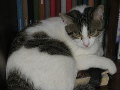 George Cat | Pawshake
