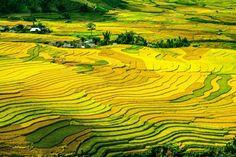 1-terase-plantatii-orez-WuXing