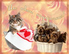 Бесплатные открытки с животными