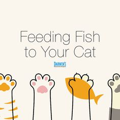 While it's tempting to indulge your kitty's palate, fish is actually not good for her health, and may even be harmful. Cat Diet, Good For Her, Cat Health, Catfish, Darwin, Cat Food, Pets, Cat Feeding, Cat Food Recipes