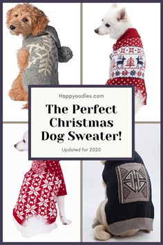 Before you know it the holidays will be here. For many of us this time of year means gray, dreary days and cold, dark winter nights. But why not bring some light to the dark winters with bright, fun Christmas sweaters for your dog. Here we have gathered the perfect dog Christmas sweater picks. SHOW US YOUR DOG'S SWEATER! (#dogsweater, #doguglychristmassweater, #christmasfordogs) Dark Winter, Winter Night, Christmas Dog, Ugly Christmas Sweater, The Perfect Dog, Dog Sweaters, Dog Care, Your Dog, Bring It On