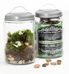 This DIY Moss Terrarium Kit comes with everything you need to create your own little Jurassic world, including two tiny brontosaurus.  Using only our best ingredients, your terrarium should live...