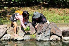Feeding turtles and koi