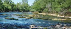 Suwannee River with rapids flowing past Big Shoals State Park.