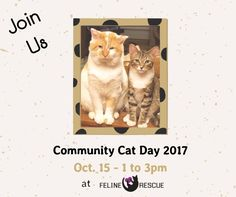 Join us at http://felinerescue.org/about-us/visit-us/