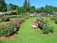 Free Things to Do This Summer with Kids in Hartford County, CT