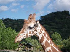 Animal Park between Calistoga and Santa Rosa