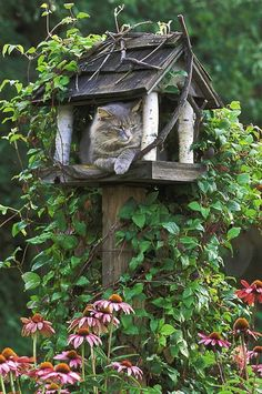 talk about hand in the cookie jar.....cat in the birdhouse