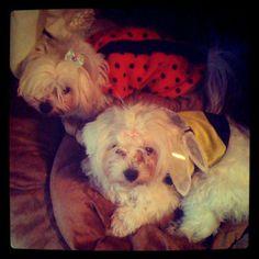 Anna Saccone @Anna Saccone Instagram photos   Webstagram. Albi and Sina's Halloween costumes