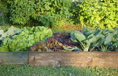 You Can Do It! First-Time Vegetable Gardening for the Black-Thumbed (C'est moi!)