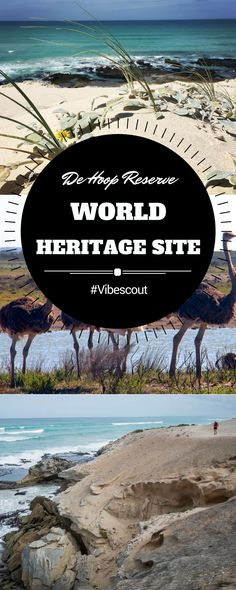 Located along the Garden Route, De Hoop Nature Reserve is a World Heritage Site because of the endemic floral species in the reserve. Family Getaways, Weekend Getaways, Wildlife Tourism, Camping Spots, Best Hikes, Romantic Getaways, Nature Reserve, Africa Travel, Train Travel