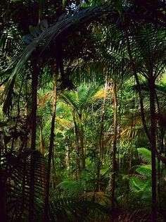 Amazon Rainforest...what a beautiful world we live in! http://www.annjaneliving.com