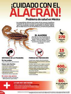 El alacrán en México Infographic, Presentation, Survival, Facts, Culture, Animals, Creativity, Workout, Education