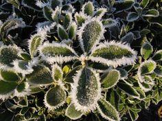 Frost in Surrey U.K.