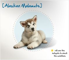 Did you know that the Alaskan Malamute was named after the native Innuit tribe, the Mahlemuts?  Read more about this breed by visiting Petplan pet insurance's Condition Checker.