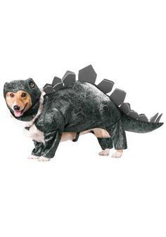 Dinosaur Costumes for Dogs. Do you feel like dressing up your dog in cute costumes for Halloween