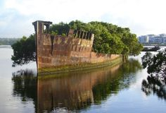 ship becomes a floating forest - The SS Ayrfield is one of many decommissioned ships in the Homebush Bay of Sydney, Australia. The ship was abandoned in since nature took over, turning the ship into a beautiful little floating forest. Abandoned Ships, Abandoned Buildings, Abandoned Places, Top Photos, Photos Du, Funny Photos, Pictures, Places Around The World, Around The Worlds