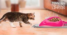 Perfect Match para gato No mas derrames en tus pisos y alfombras  www.airdesignpets.com