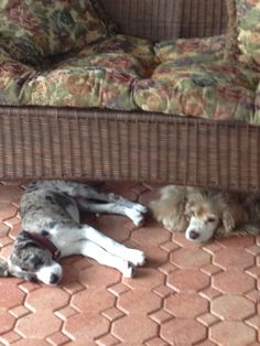 """Nap time with """"big"""" sister Sarah - Sarah is wondering why at almost sixteen years old she has to deal with a puppy."""