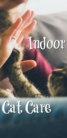 Indoor Cat Care - Tips, tricks and how to look after them in the best way properly!