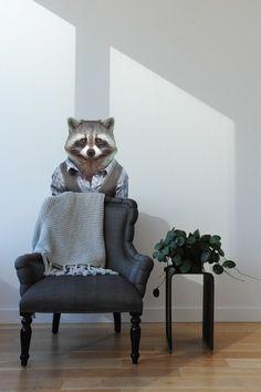 Zoo Portraits: Raccoon wall decal X Blik