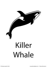 Related image Filter Feeder, Baleen Whales, Gray Whale, Reading Comprehension Worksheets, Ocean Rocks, Primary Resources, Student Reading, Killer Whales, Animal Cards