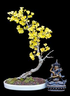 ginko - Will Hiltz Much nicer than the usual ginko 'broom' image