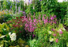 zahrada mých snů....