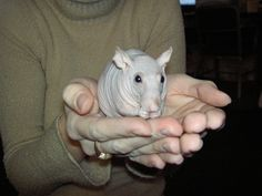 hairless rat ( Piglet) by gizmo_three, via Flickr