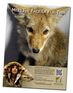 "Doc the face of fur trim | Say ""no"" to fur in fashion"