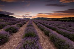 After my second visit to Provence, I was lucky today with a cloudy and colorfull sky I had in mind. What a Scene...
