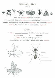 Hmyz 1 ( úvod a části těla) Scandal Abc, Science And Nature, Insects, School, Kids, Biology, Young Children, Boys, Children