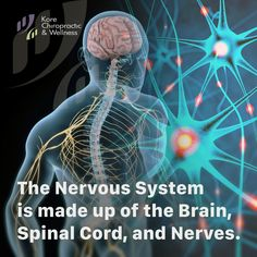 The Nervous System is made up of the 🧠 Brain, Spinal Cord, and Nerves. The houses the Nervous System. Wellness Clinic, Chiropractic Wellness, Health And Wellness, Health Care, Vancouver Neighborhoods, Spinal Cord, Massage Therapy, Health Problems, Nervous System