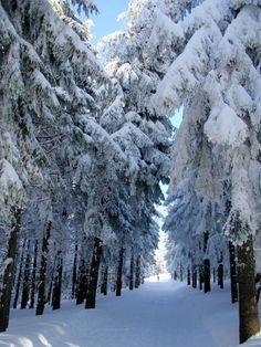 way through winter forest