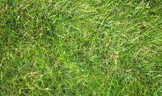 Texture Grass Download