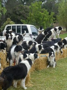 Sheepherders Convention. And for Cheryl.