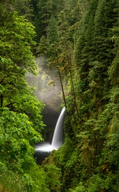 Falls along Eagle Creek Trail in Columbia River Gorge, Oregon, USA