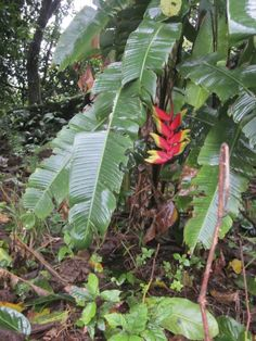 A trip to a Rainforest Alliance certified tropical flower farm in Costa Rica / Family Focus Blog