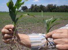Éxito de la jornada de semilla certificada en Aragón de