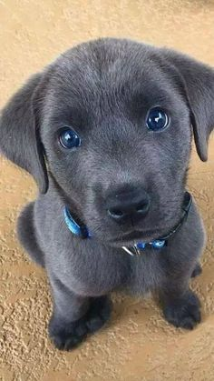 Puppy pictures make the day better. - Puppy pictures make the day better. Puppy pictures make the day better. Puppy pictures make the day - Super Cute Puppies, Baby Animals Super Cute, Cute Little Puppies, Cute Little Animals, Cute Dogs And Puppies, Cute Funny Animals, Cute Cats, Doggies, Funny Dogs