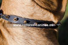Artesanal collar de pinchos para perros Cane Corso diseño de moda acero y cuero - C110