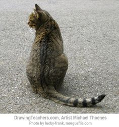 Gallery For > Cat Sitting Back View Drawing